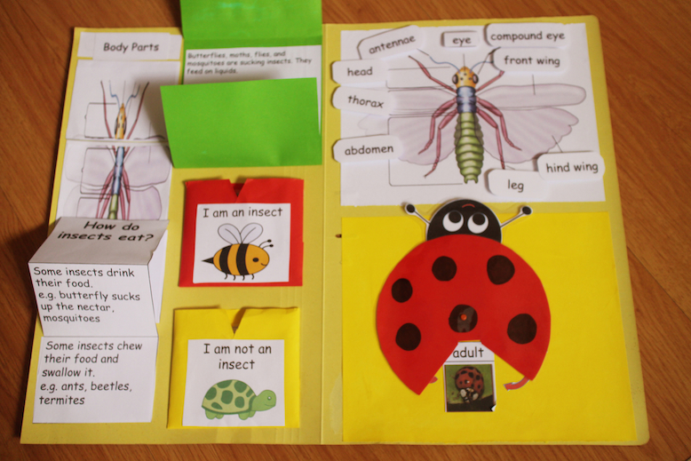 Lapbook about insects