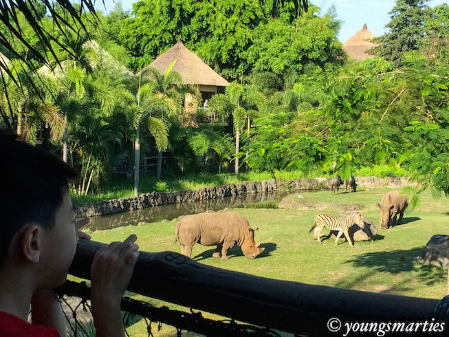 An adventure at Mara River Safari Lodge (Bali)