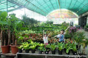 Smarties' gardening journey: Part 1