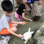 Unschooling: Road Trip to KL Rabbit Fun Land (Finale)