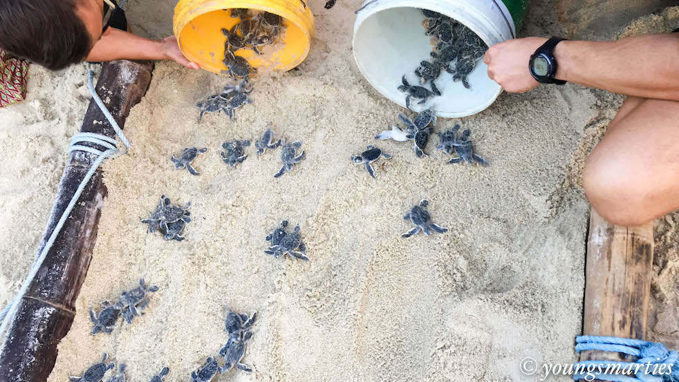 Home Learning Trip Part 2: Learning more about turtles and nature (with home learning and travel tips)