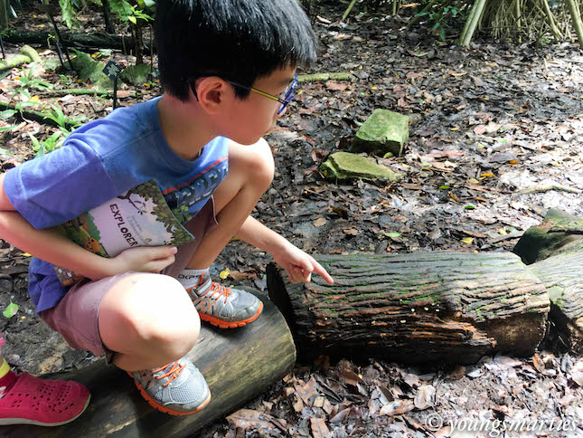 Checking out the fungus