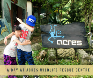 A day at ACRES Wildlife Rescue Centre