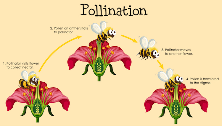 Diagram showing pollination with bee and flowers